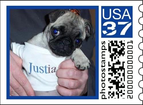 Sheba wearing a Justia Shirt Stamp