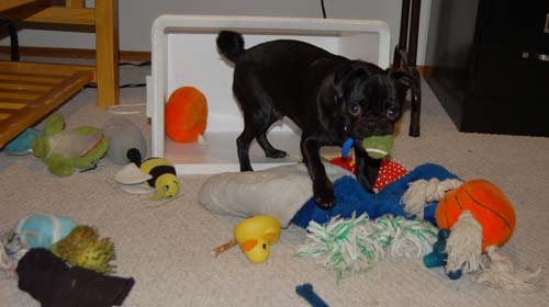 Rio with Toys
