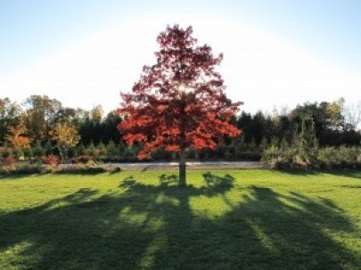 """Photo by Ali Zein Yousuf. """"Taken at the Arboretum with a Canon Powershot G11 on 10/25/09."""""""