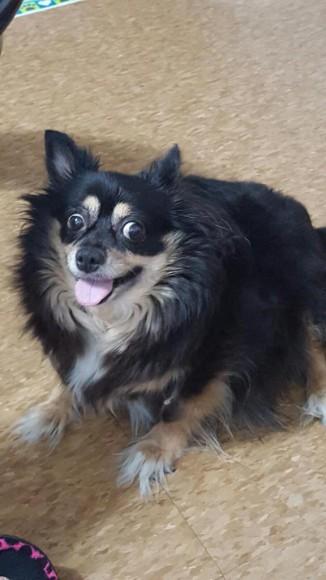 cross eyed dog