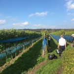 Zomergloed – Secco 2020 van Wijngaard Aan de Breede Beek in de aanbieding