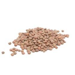 Lentils brown