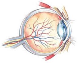 Vaatvlies, uitleg oog, door oog voor optiek