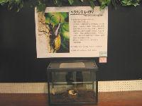 昆虫イベント 江釣子ショッピングセンターパル06