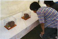 昆虫イベント 大阪府草野球場市民の広場02