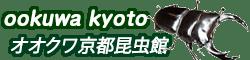 国産オオクワガタ ♀52mmメス単品 今年羽化 新成虫|オオクワ京都昆虫館 オオクワガタ カブトムシ 昆虫専門店