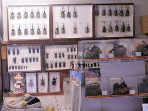 お店の内観 標本展示2