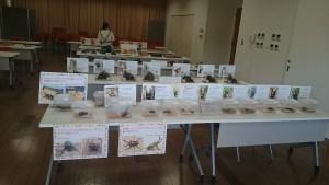京都市動物園の昆虫イベント開催b