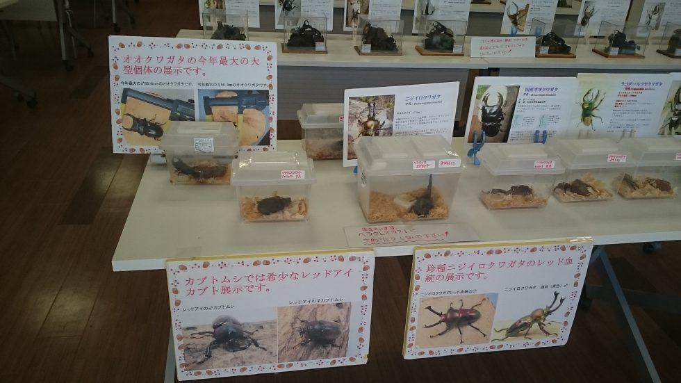 京都市動物園の昆虫イベント開催c