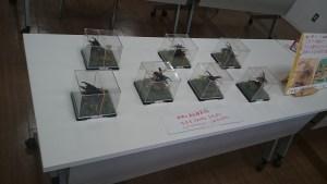 京都市動物園の昆虫イベント開催d