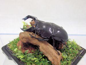 タランドゥス♂79レプリカ標本f
