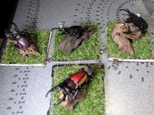 ジオラマ標本の作製したレプリカ標本たち