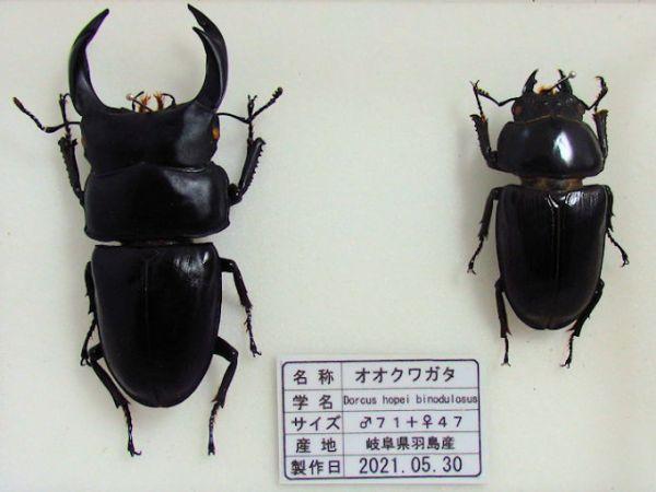 heiookuwa-ha001