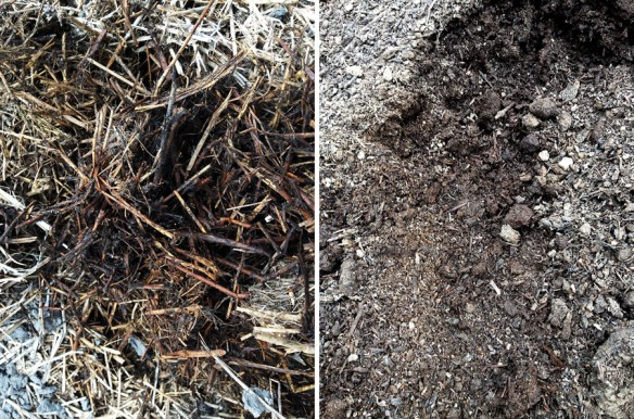 Compost before & after