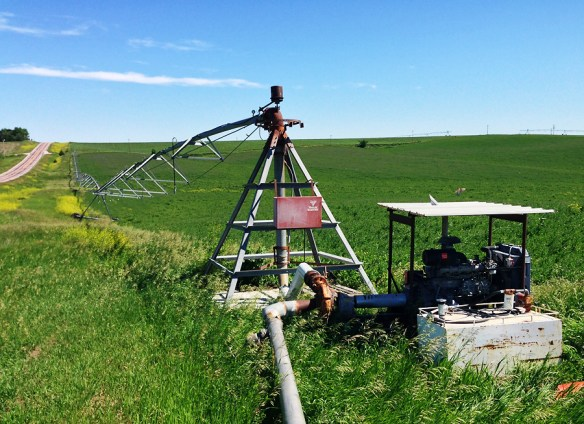 A different, but nearby, pivot irrigator