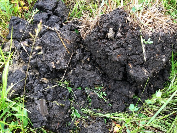 "Soil from a no-till arable field next to a mob grazed paddock. The arable soil would not hold together in a lump. When we inspected them up close, Neil said ""I can see they are different, but I don't know how"". Join the club!"