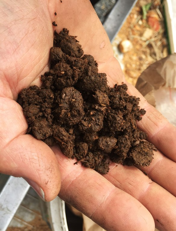 "This is composted cow manure. But not just any composted cow manure, it has been aged in a cow's horn, and is known in Biodynamic circles as ""Preparation 500"""