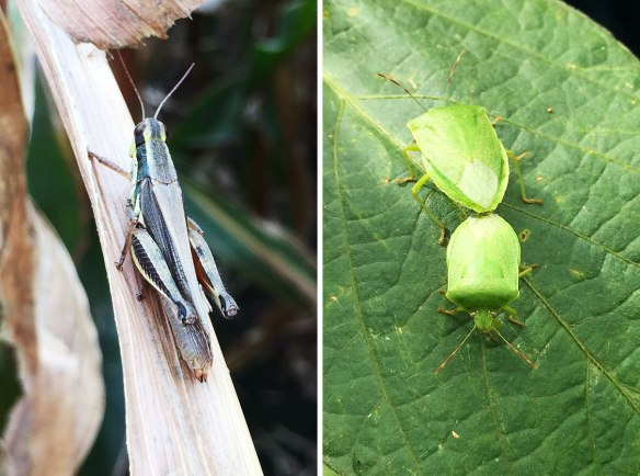 Why this photo? Because I can, and it still amazes me that a phone will take these photos. On the right are a couple of aphids, slightly bigger than the ones at home