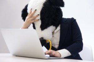 パソコンと牛