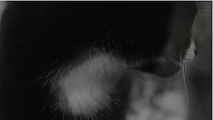 Catwalk, screenshot
