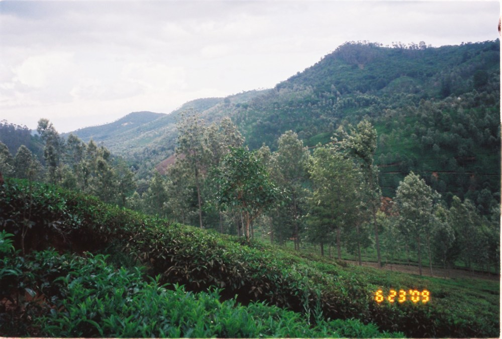 20 acres of land available near Manjoor, Ooty (5/6)