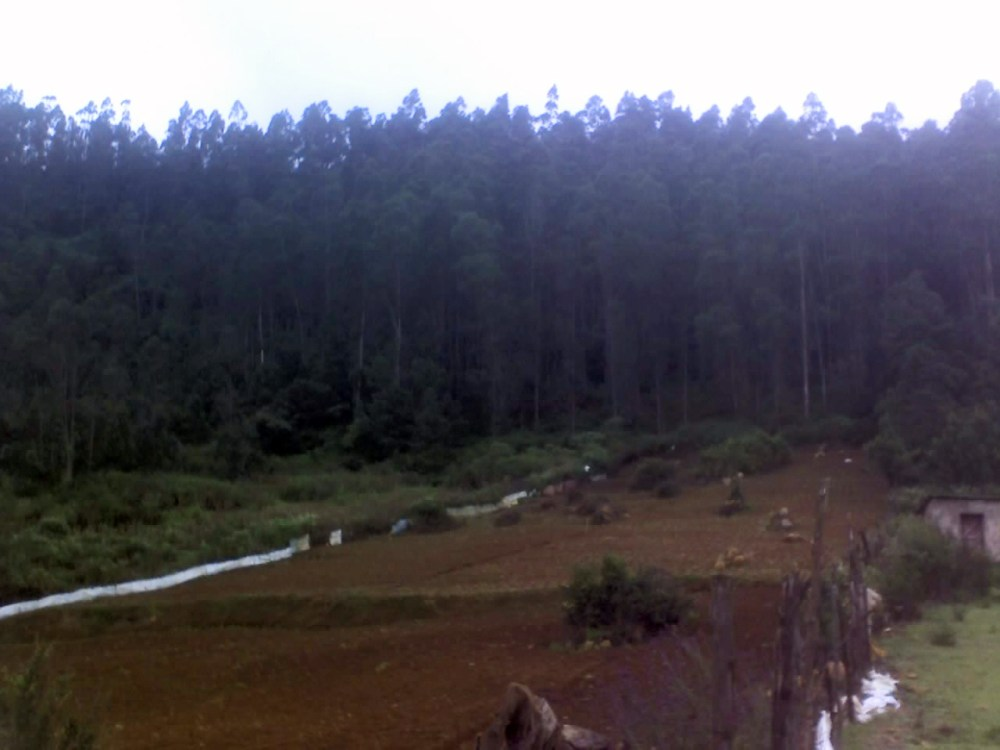 Land available for sale 25kms from ooty (1/6)
