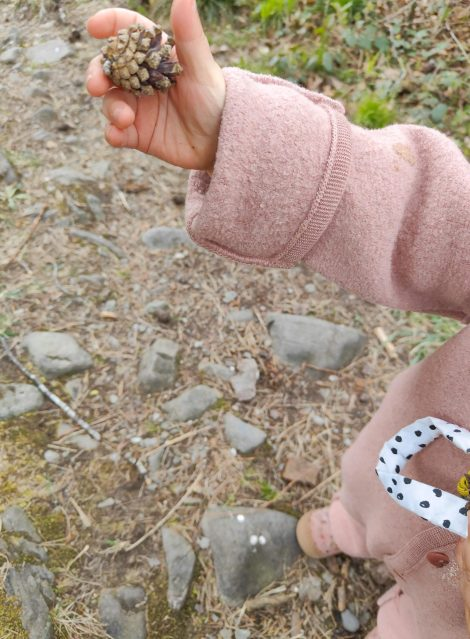 Mit Kindern den Wald entdecken