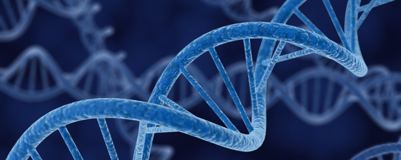 What is your company DNA?