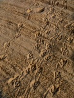Duckprints on Lagoon Beach (Photography by Joanne Edith)