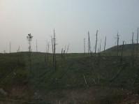 foto van verbrande bomen in black hills