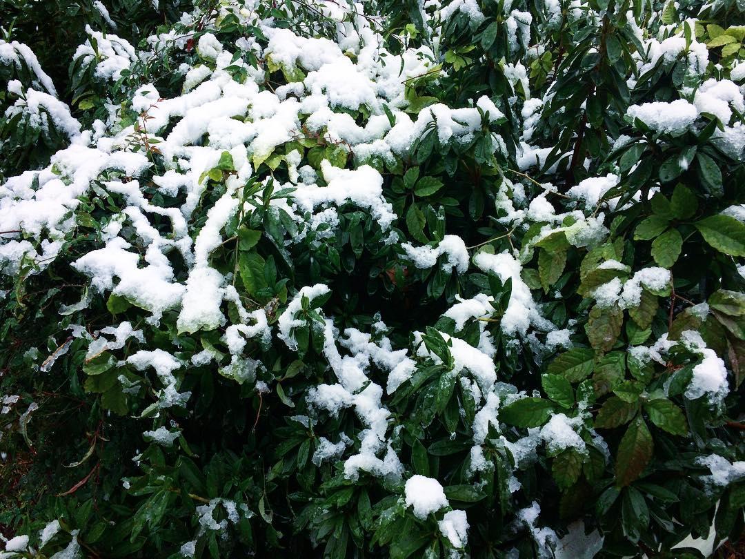 初雪(2016.11.24)