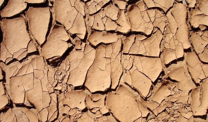 pele seca imagem