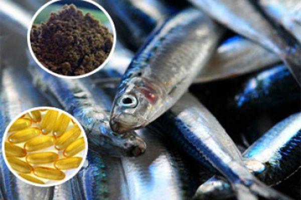 Suplementos de ácidos grasos Omega 3 de origen marino