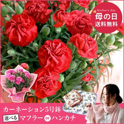 母の日、花の日、感謝の日 (^O^)/