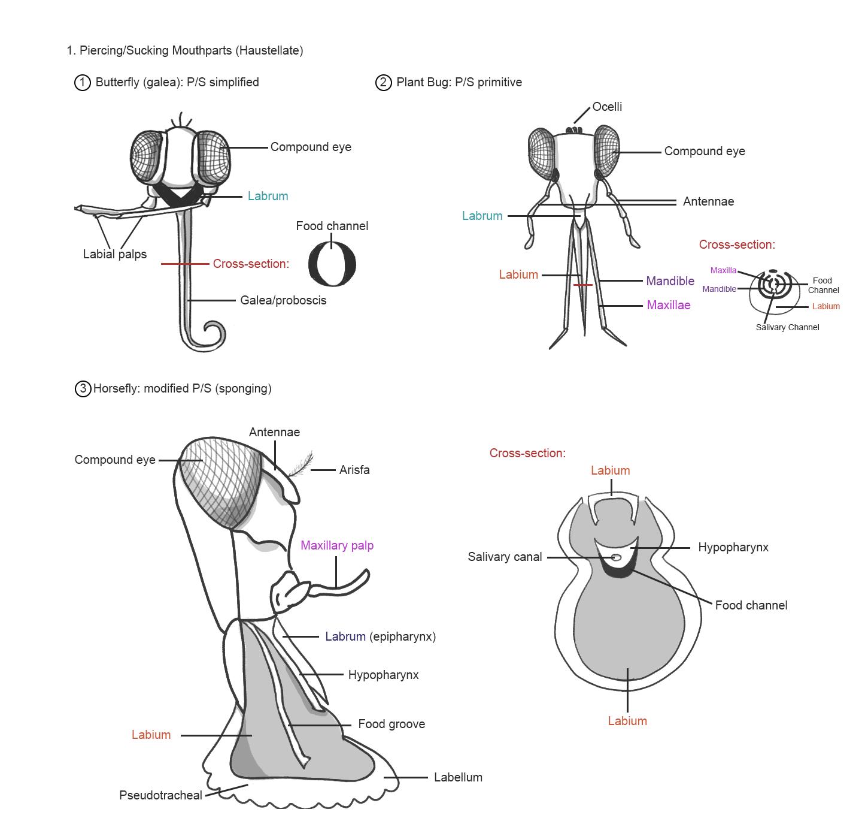 Lab 2 Assignment Internal Anatomy Entomology 311 Lab Manual