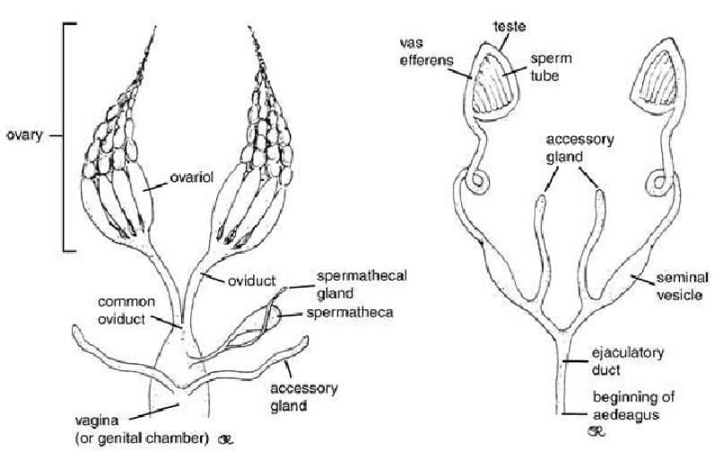 Lab 2 Assignment: Internal Anatomy