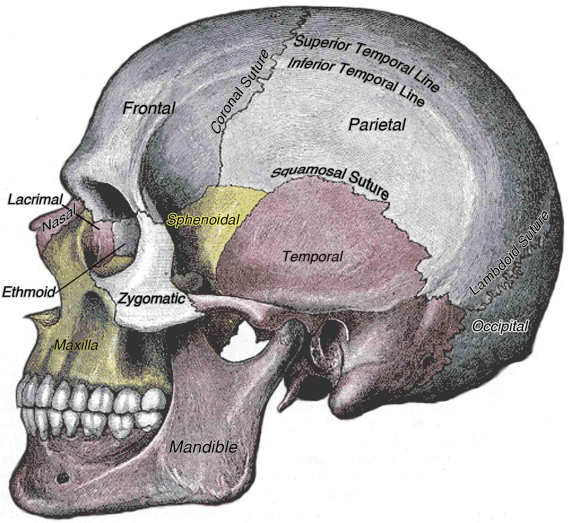 7 0 Introduction Anatomy Amp Physiology