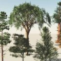 9 Free 3d Model of Trees Collection