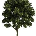 Green Tree Free 3d Model