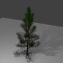 Nature Christmas Pine Tree