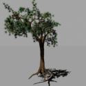 Nature Joshua Tree