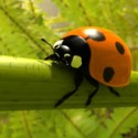 Realistic Ladybird 3d Max Model Free