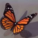 Butterfly Animal 3dsMax Model