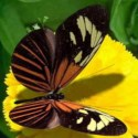 Insect Butterfly 3d Max Model Free