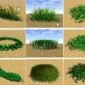 Garden Landscape  £º Grass