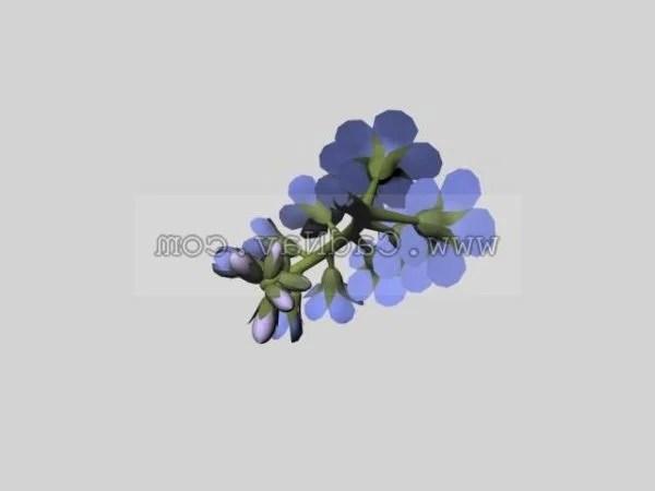 Myosotis Plant