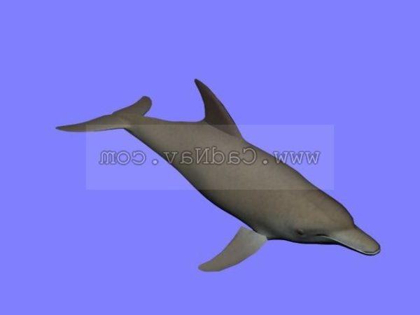 Animal delfín