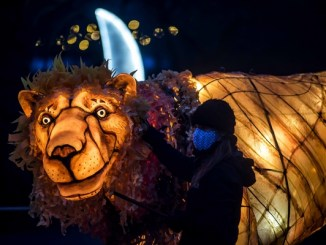 Chester zoo lion light
