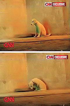 CNN's pets