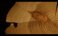Art Basel video Nicholas Mangan